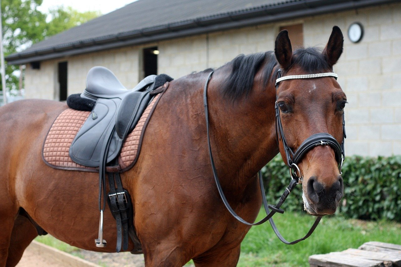 Saddle Fitting image of horse with tack on