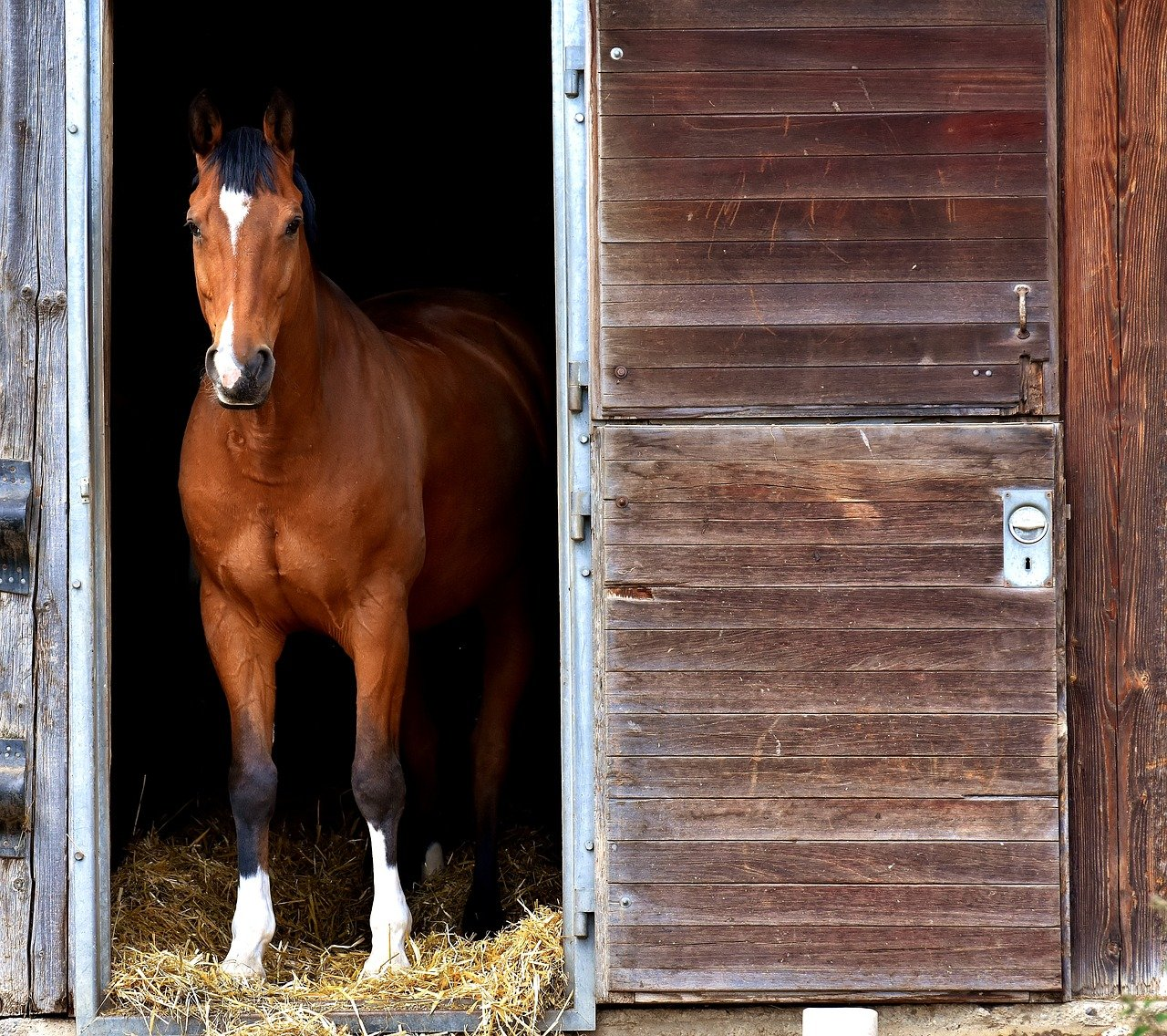 Horse stood in stable