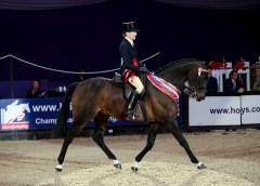 Minella Rebellion takes the SEIB Racehorse to Riding Horse HOYS title