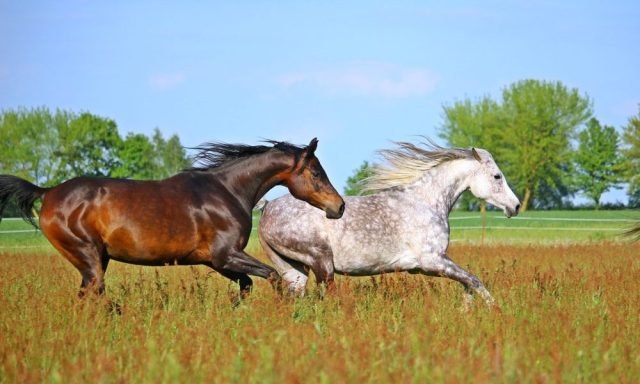 Domestic horse origins revealed in new study