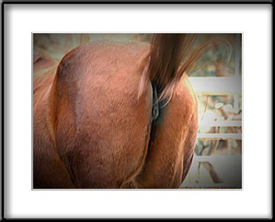 horse_ass