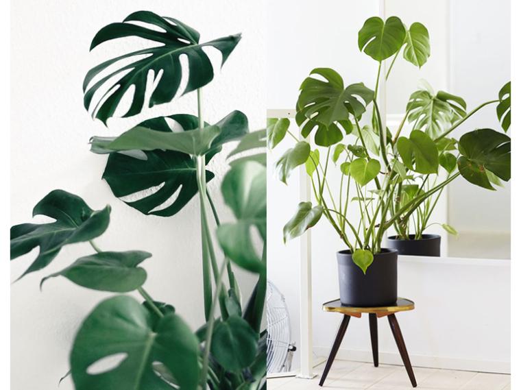 Grote Plant Woonkamer