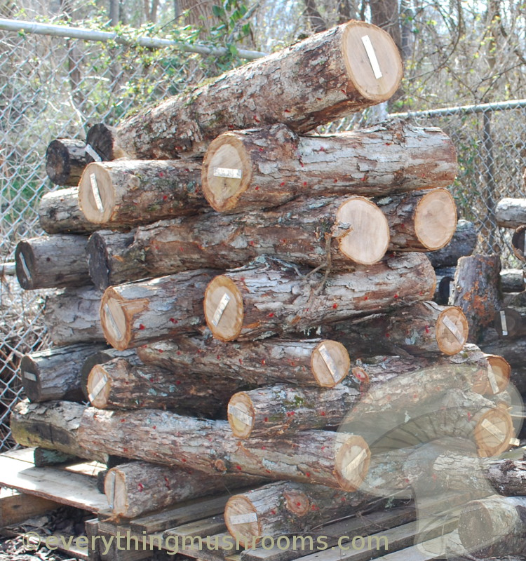 When is the Best Time to Plug Logs, and Other Nitty-Gritty