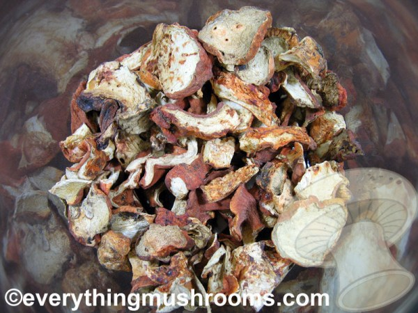 Lobster Mushrooms, Hypomyces lactifluorum - bulk by the ounce