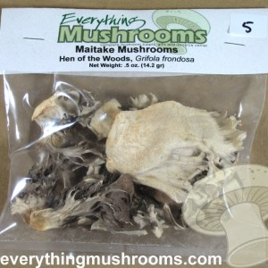 Maitake Mushrooms, Hen of the Woods, Grifola frondosa - .5oz pack