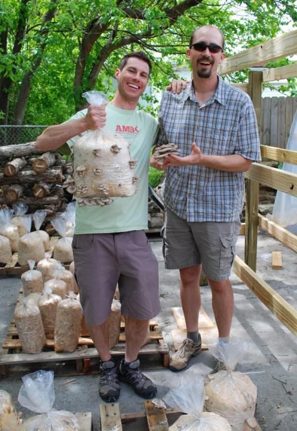 Pleurotus ostreatus : Pearl Oyster Mushroom - 10cc liquid culture