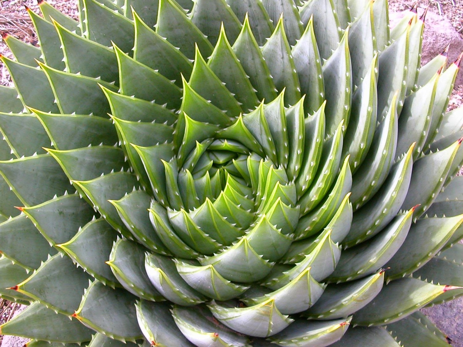 Sacred Symmetry The Art Of Nature