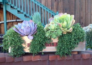 Succulent Cafe Arrangement