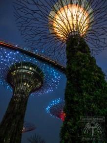Lunar New Year Festivities: River Hongbao and Garden Rhapsody