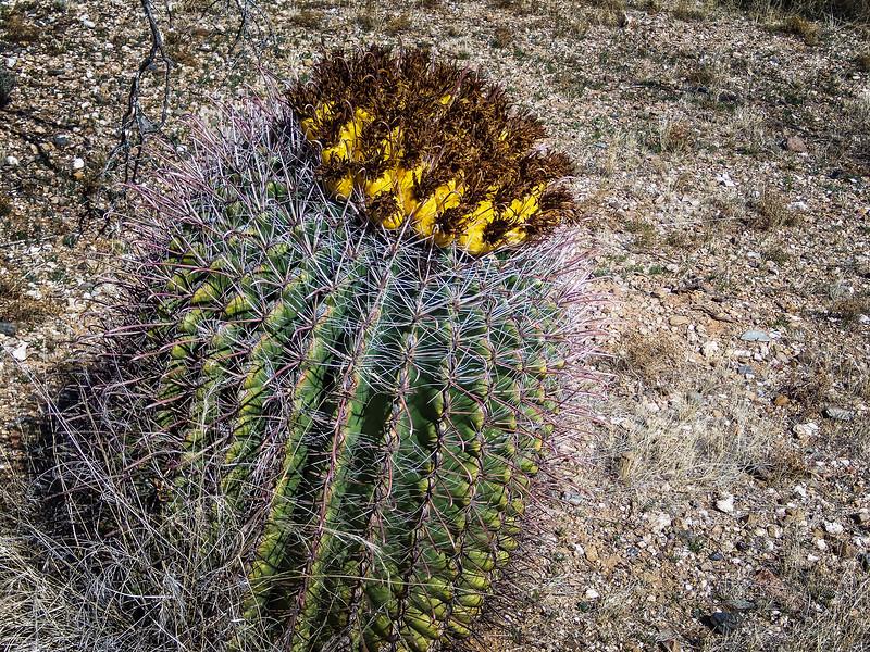 arizona pictures