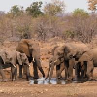 Kruger National Park: Zehn Tipps und Empfehlungen für die perfekte Safari