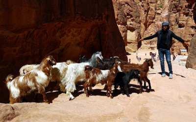 Ziegenhirte in Petra, Jordanien