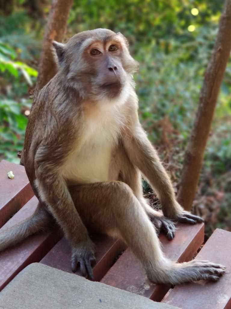 Affe an der Yathae Pyan Höhle