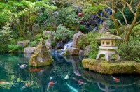 Japanese Garden Koi Pond | Everywhere Once
