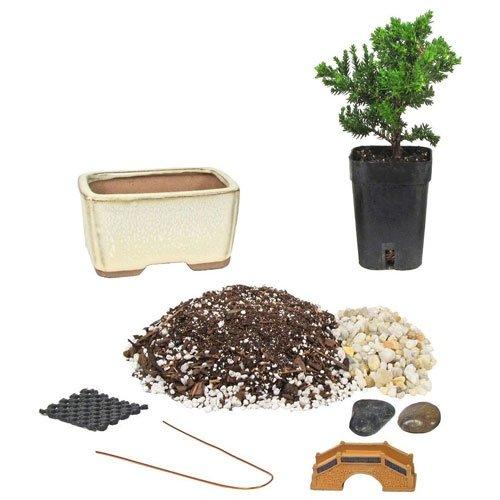 Starter Bonsai Kit