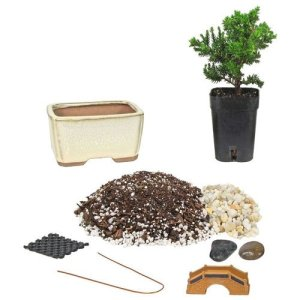 Starter Bonsai Kit