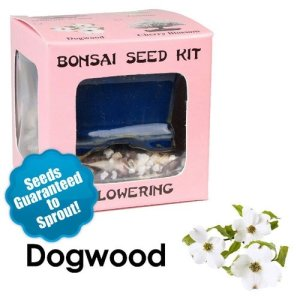Dogwood Bonsai Seed Kit