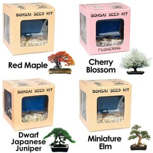 Bonsai Seed Kit Special Bundle