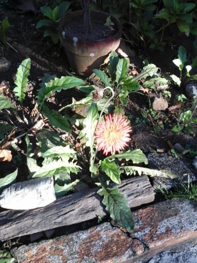 aunt's plants
