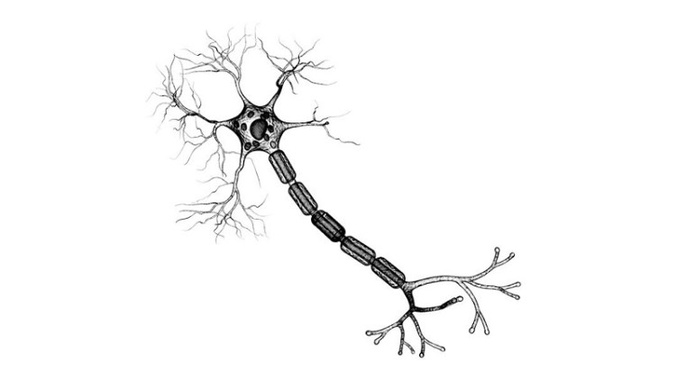 Nerve cells and artificial neurons