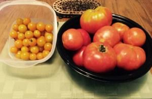 darren organic tomatoes