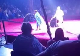 Αρκούδα επιτέθηκε σε έγκυο