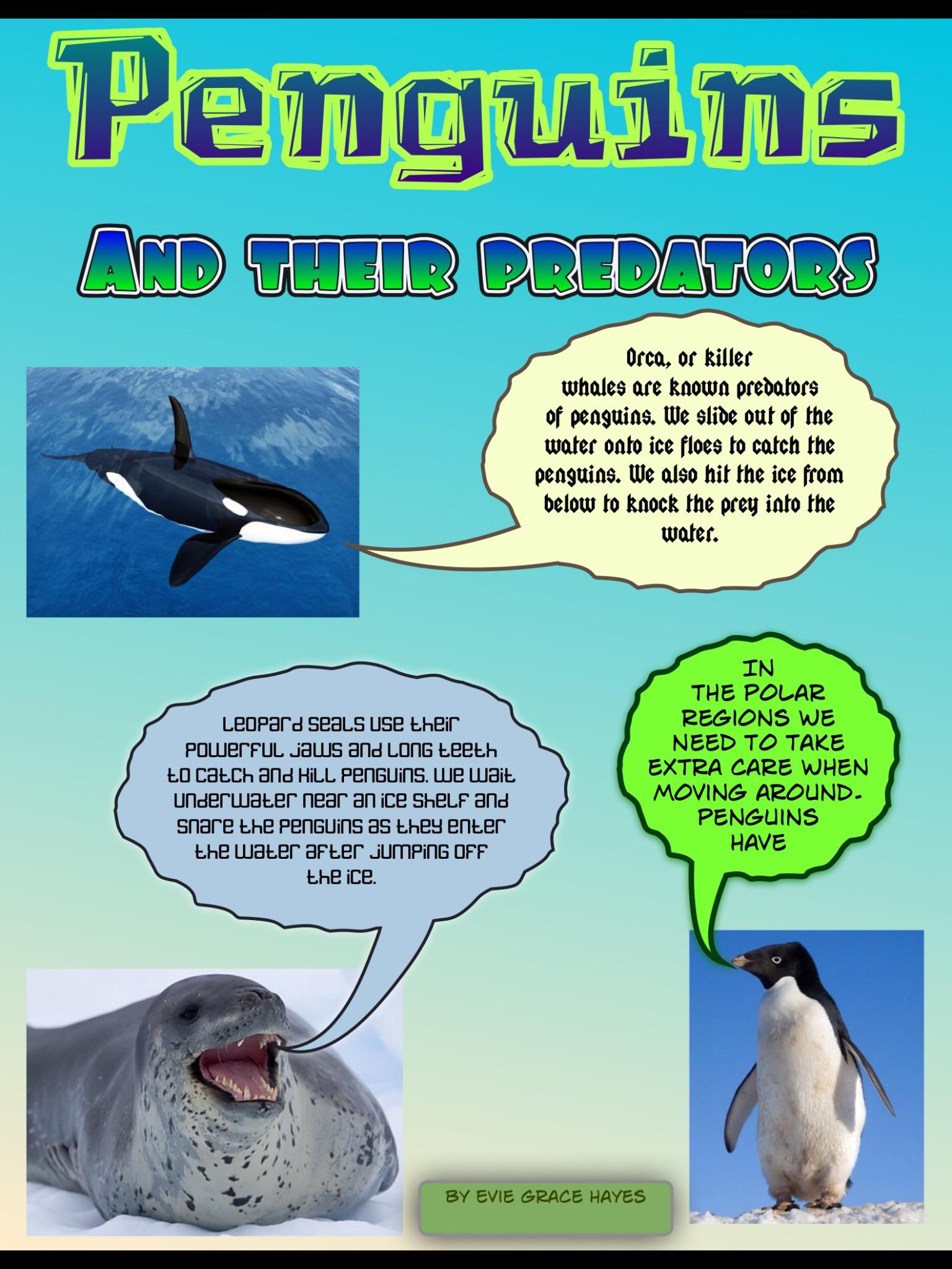 Homework Project Polar Habitats