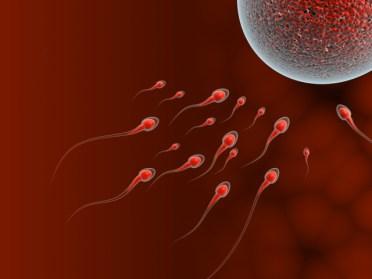 Sperms trying to reach a human ovum