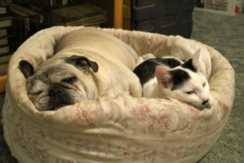 Cat and dog napping together