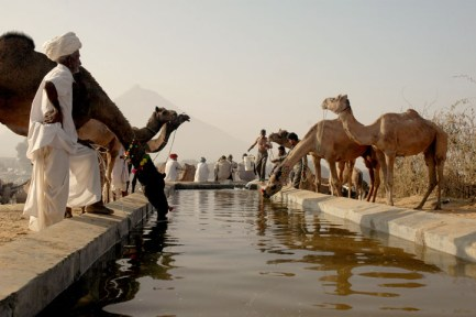 Camels and people at watering hole