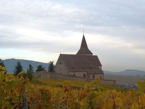 Church and vineyards in France