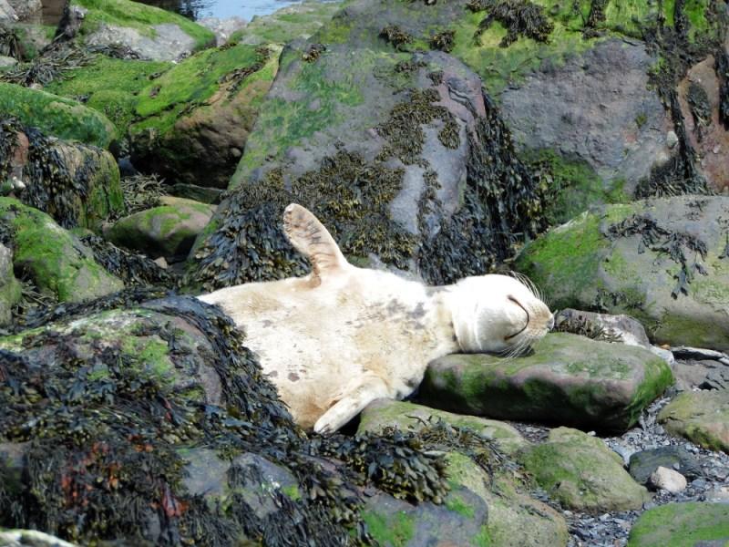 Photographier une colonie de phoques à Ravenscar