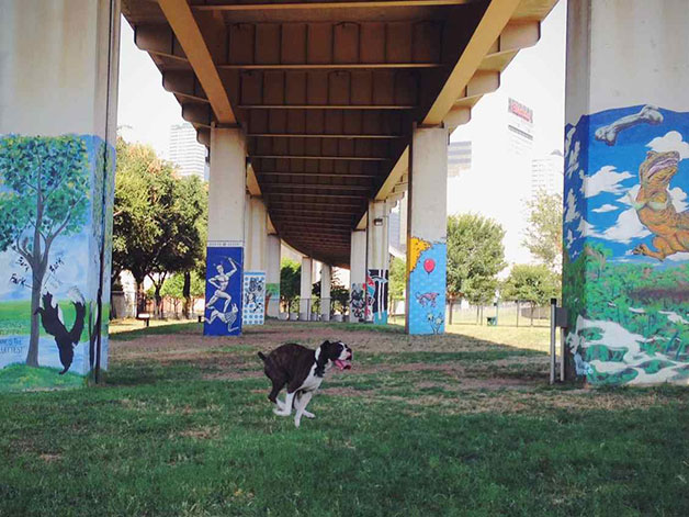 Deep Ellum dog park in Dallas, TX