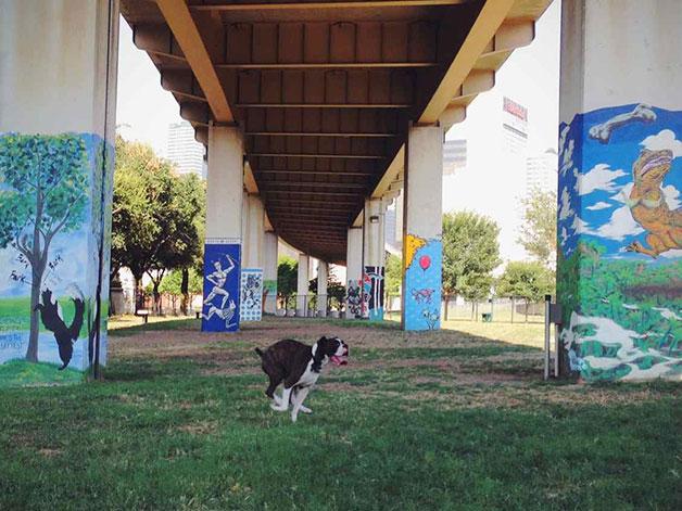 Claremont Dog Park