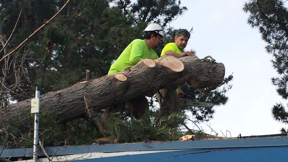 East Bay Tree Service team ropes the fallen pine on the roof of the marina structure.
