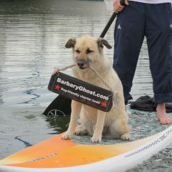 Nikko of Barbary Ghostr helps publicize the boat's paddle boarder transport.