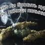foto-kurenie-i-polyin