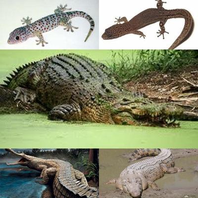 Hewan Melata Reptilia  World Animal