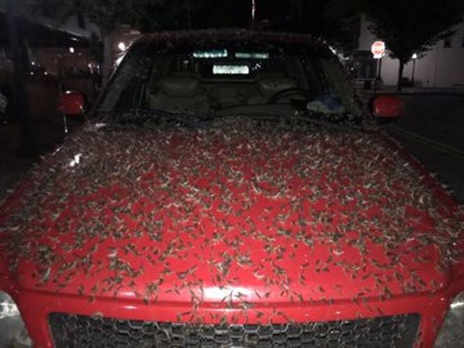 На мир началось нашествие жуков.