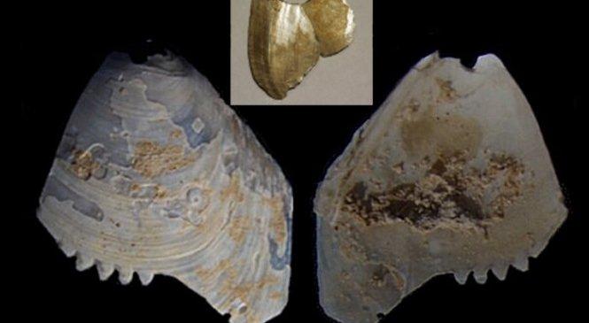 Артефакты из раковин аборигенов с мелкими зазубринами и отверстиями — свидетельства из реки Мюррей, Австралия
