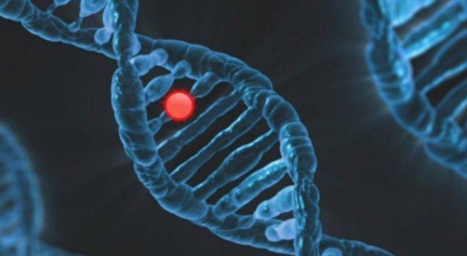 Гены могут реагировать на закодированную информацию в сигналах — или полностью их фильтровать