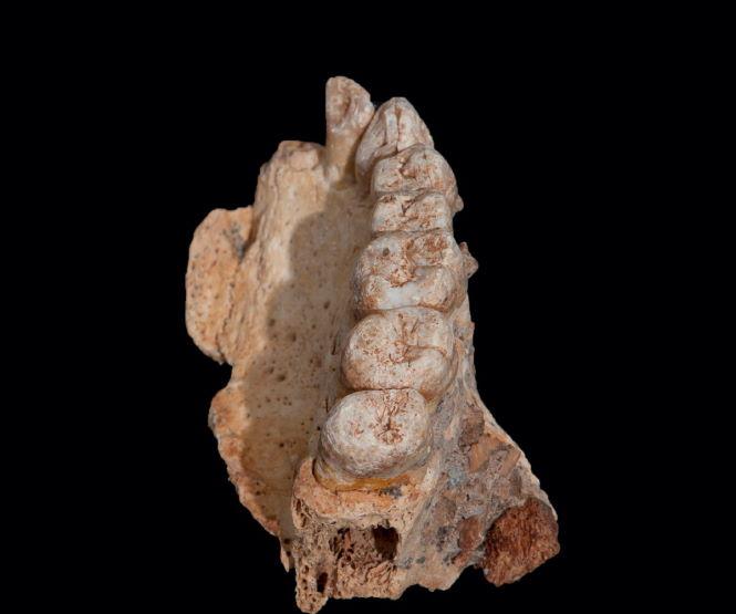 Запретная археология. Артефакты, не вписавшиеся в историю человечества
