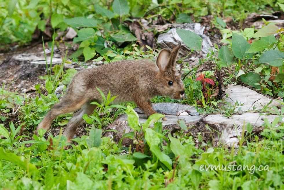 image of a bunny hopping onto a short stump