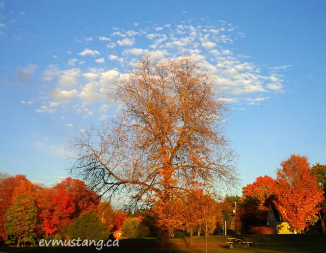 image of a bare fall tree with a halo of textured cloud