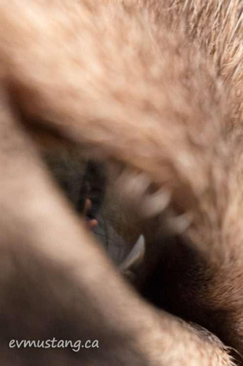 macro image of the photographer's hand reflected in the sidelong glance of a cat