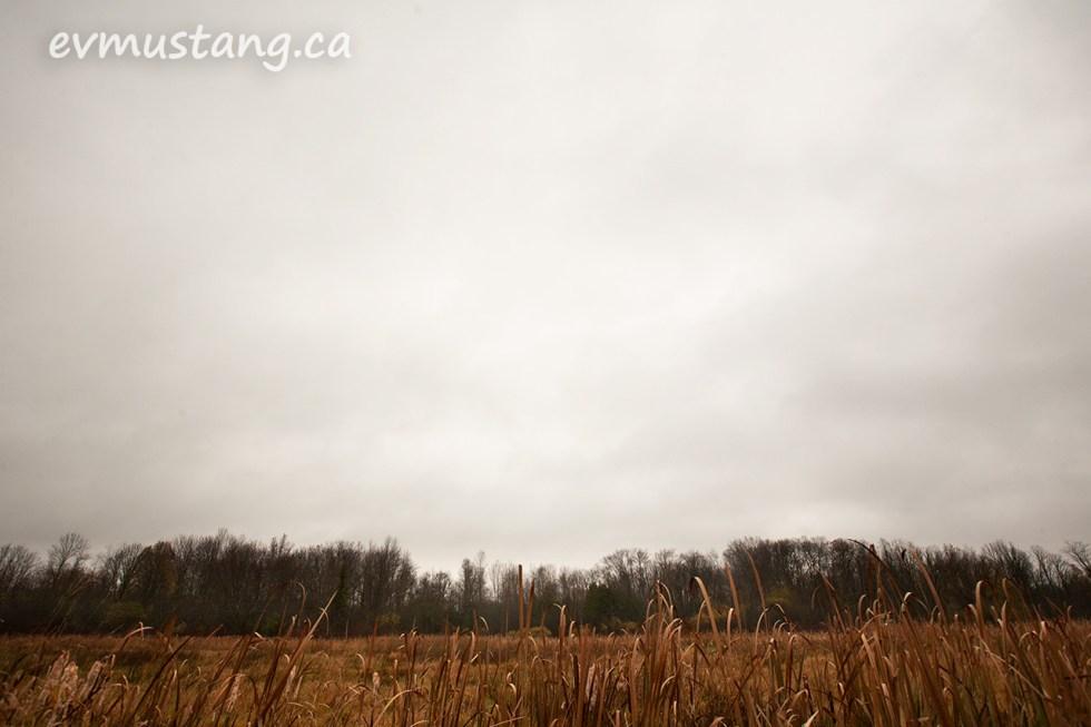 image of a marsh land under a grey sky