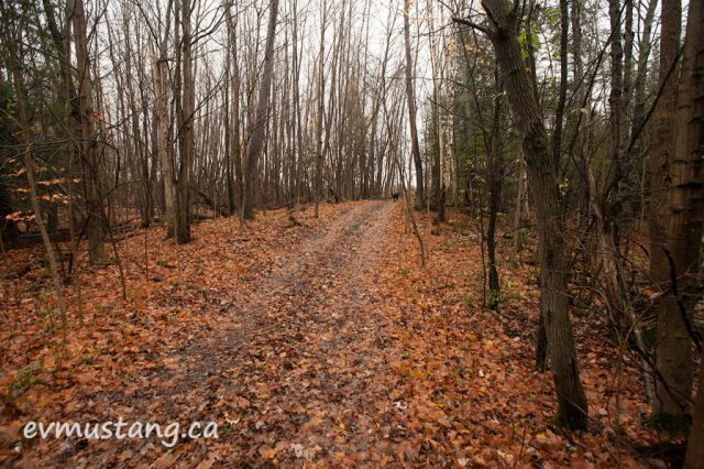 image of orange fall leaves on a walking path in the woods
