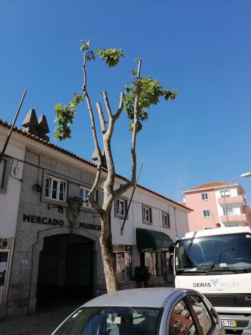 """árvore """"cabide"""" em Oeiras"""