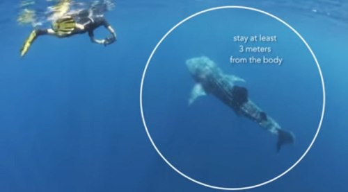 Power To Protect: Essential Marine Wildlife Tourism Guidelines