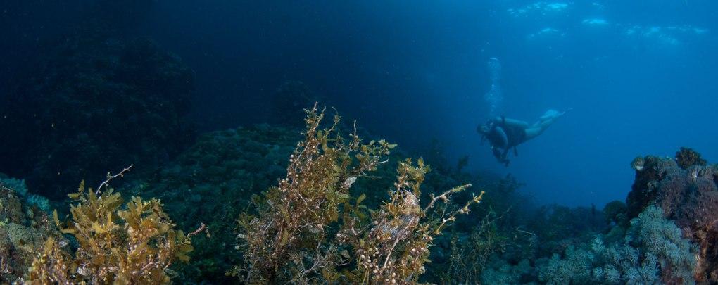 dive sites malapascua evolution diving resort